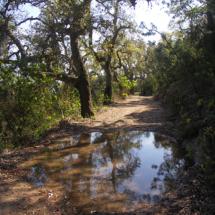 Camí de bosc
