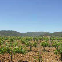 Vinya a Vall-llobrega